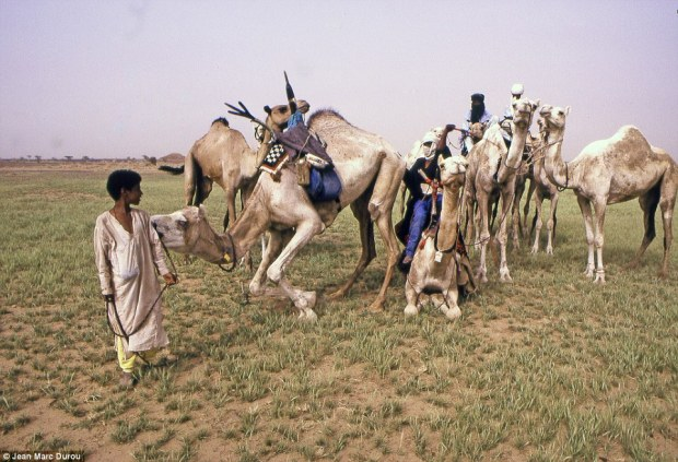 29C7008000000578-3131511-Lifeline_The_camels_are_of_vital_importance_in_the_Sahara_and_ar-a-10_1435129466190